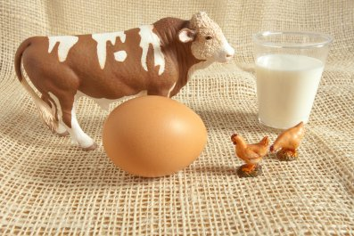 Cow, egg, chicken and milk