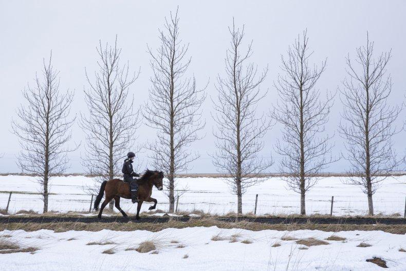 Icelandic woman riding horse