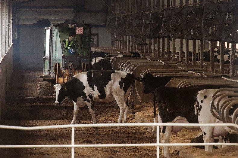 Dairy farm, China