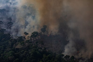 Amazon rainforets fires