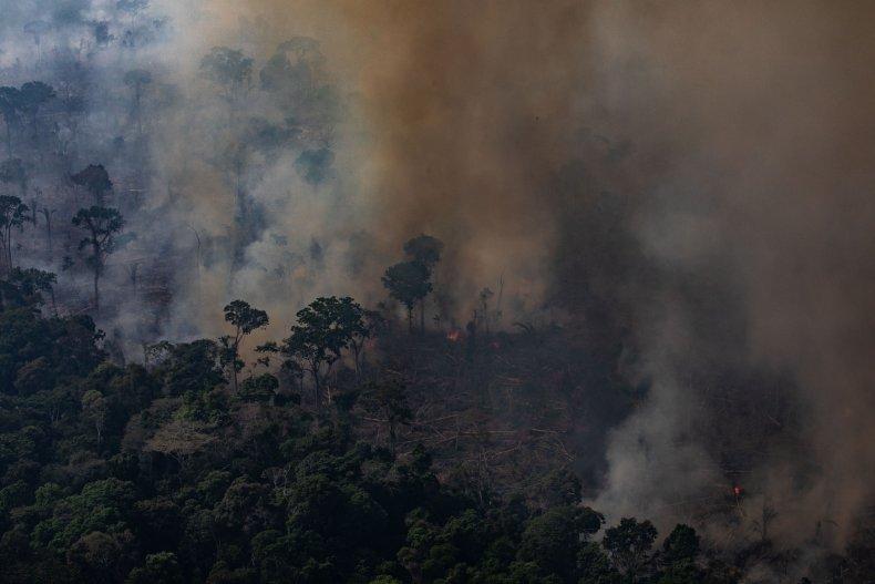 Amazon rainforets fires