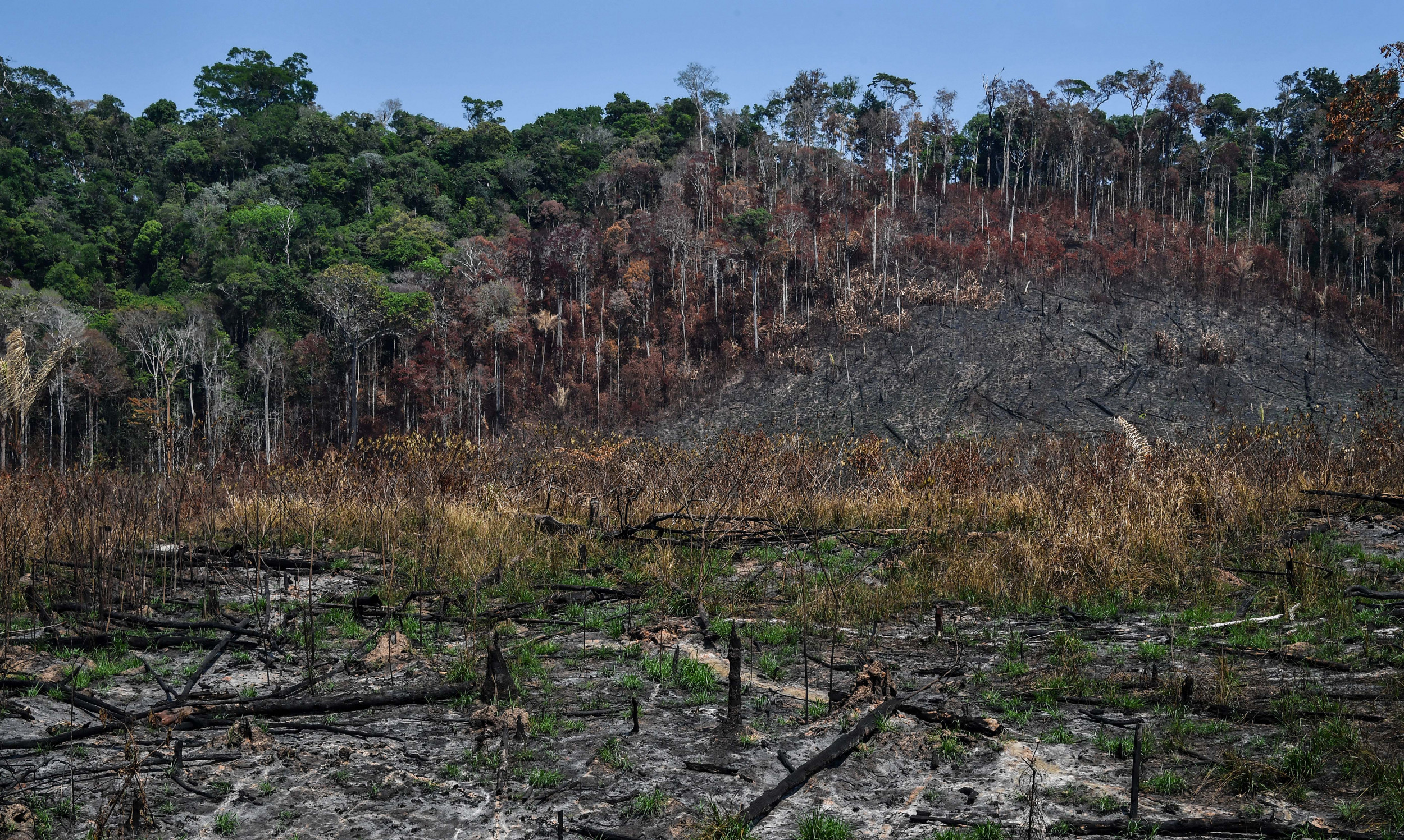 The Amazon Has Reached A Tipping Point Where It Has Begun To Self
