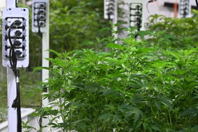 Marijuana Federal Guidance Needed, Cannabis Companies Say