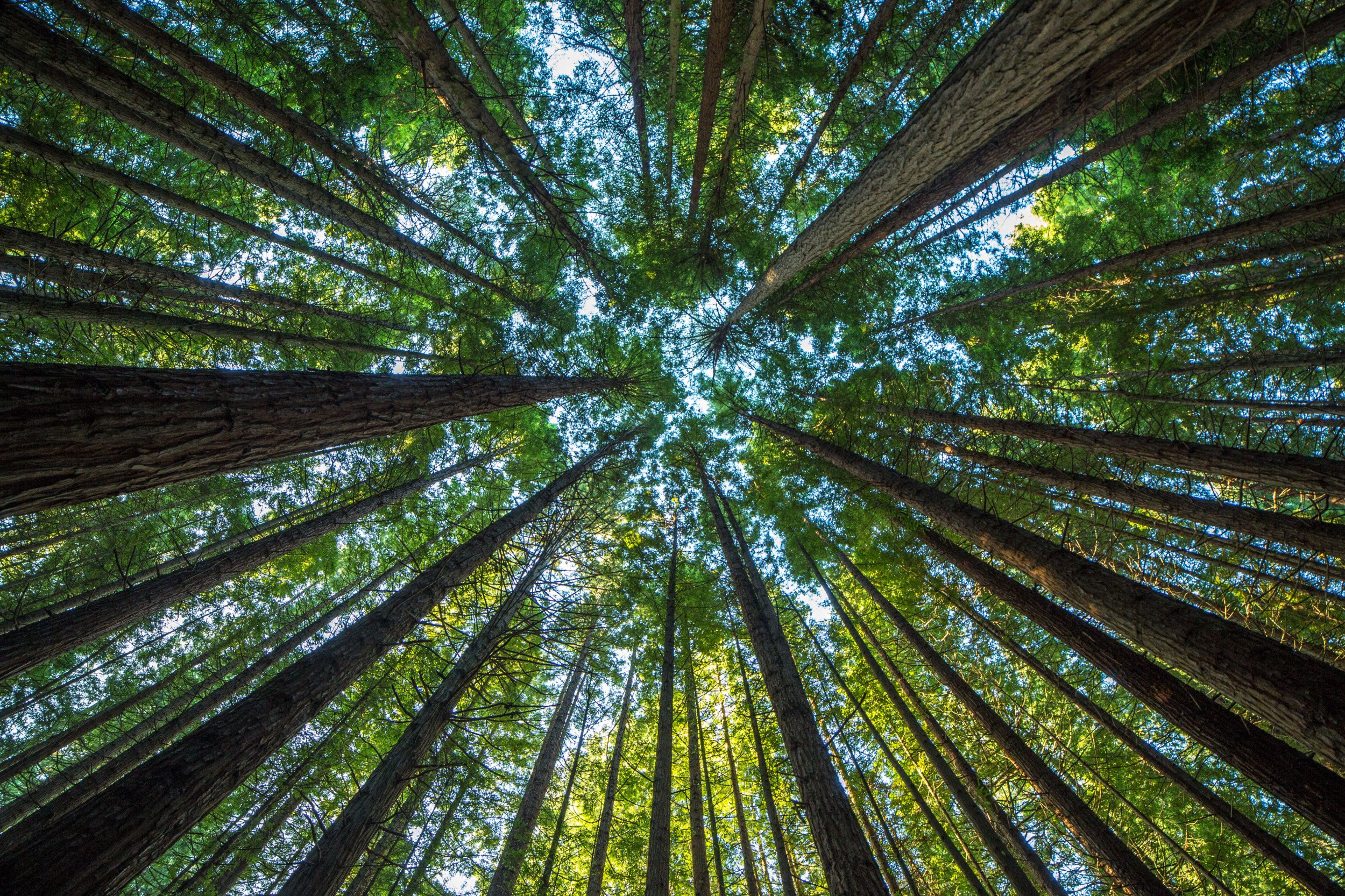 Scientists Say They'll Plant 1 Billion Trees by 2028 Using ...