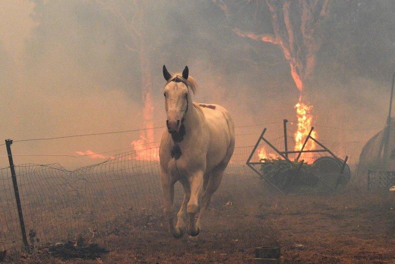 Australian fire horse