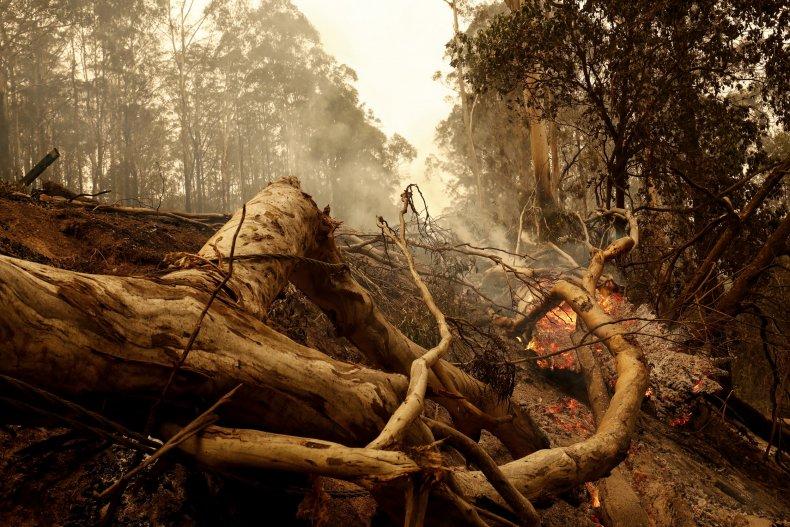 Burnt trees and debris Victoria