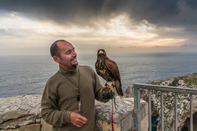 Falconry in Malta