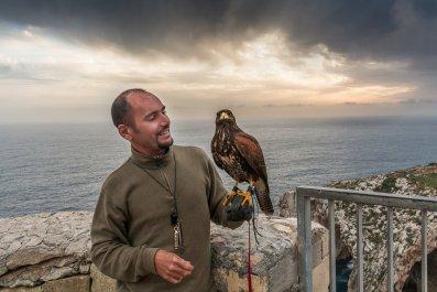 Falconry in Malta