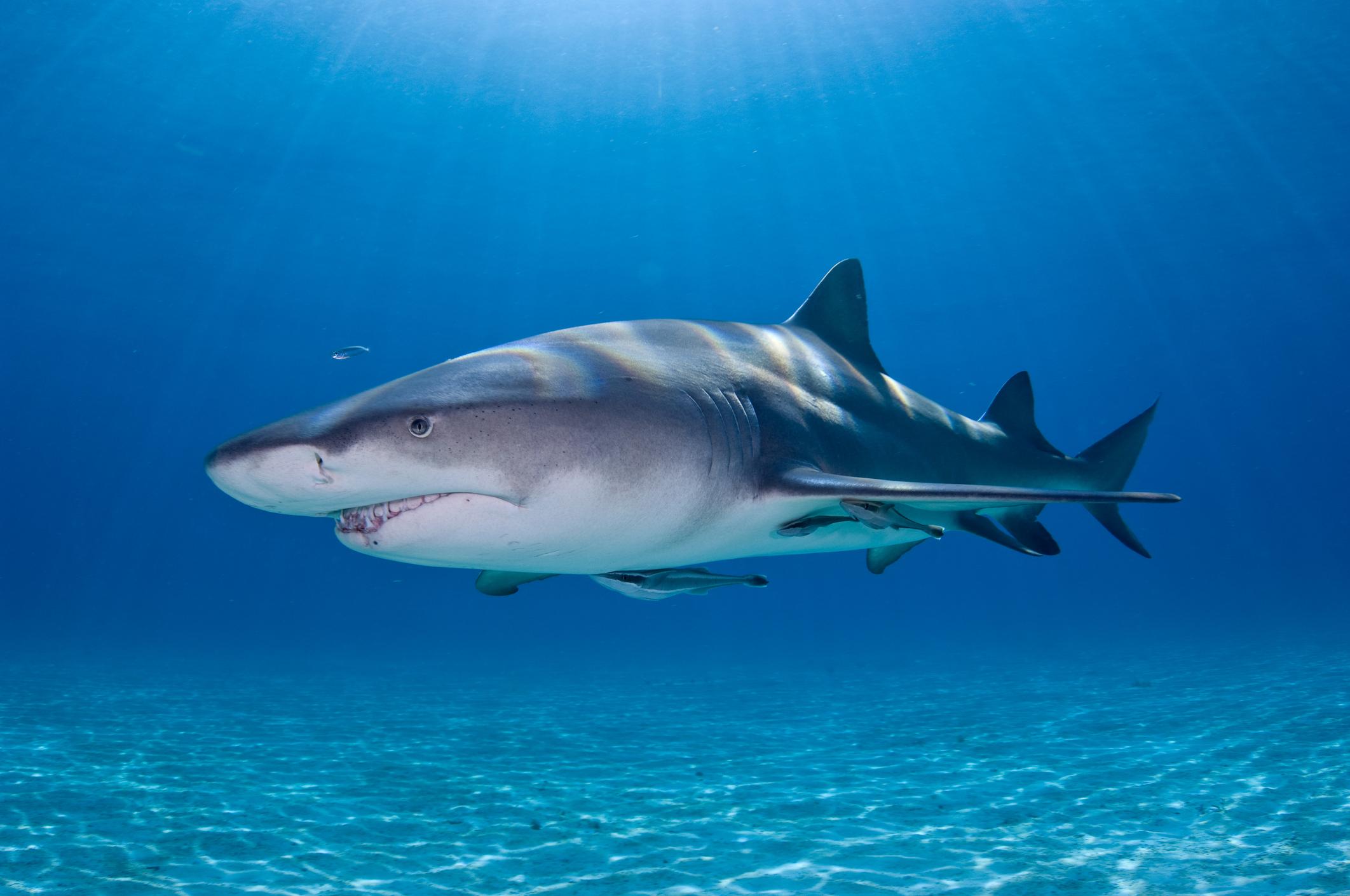 Дельфин акула на одной картинке