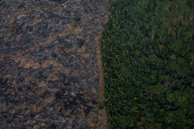 amazon rainforest, brazil, wildfire,