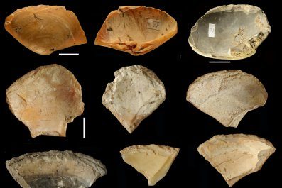 Neanderthal clam shells