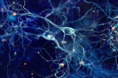 brain, neurons