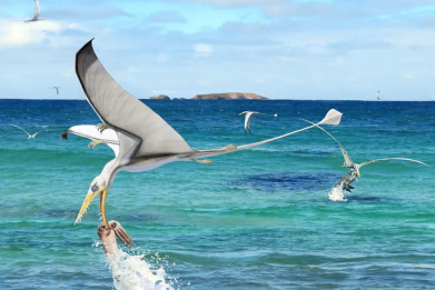 Pterosaur hunting squid