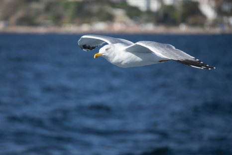 File photo: Albatross