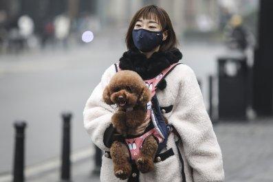 Wuhan China dog January 22 2020