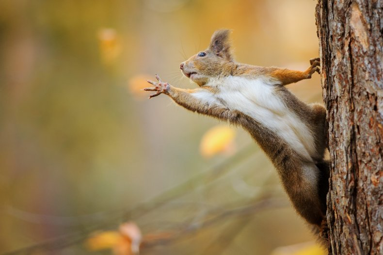 Squirrel reaching off of tree