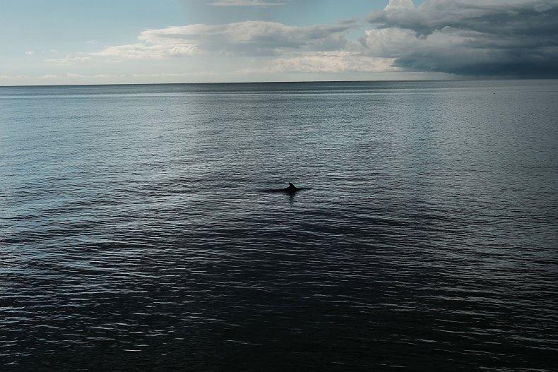 Dolphin Naples Florida 2018