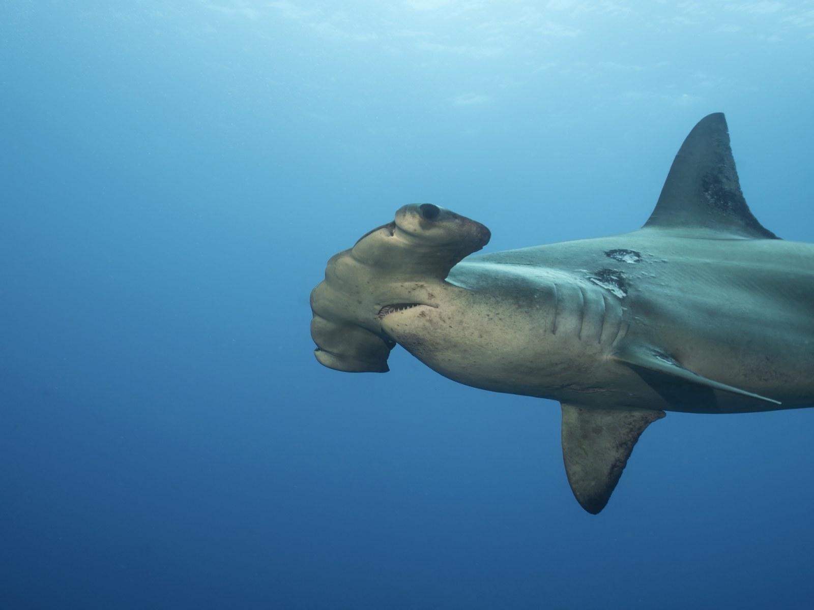 Shark Filmed Lurking Mere Feet Away From North Carolina Surfer