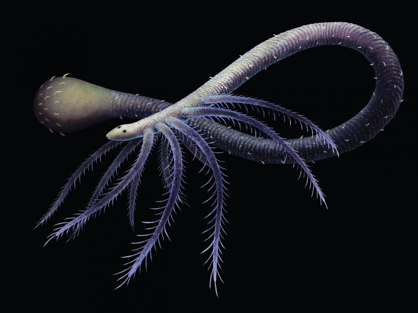Bizarre Worm-like Creature Lost Its Legs 518 Million Years Ago Because They Were No Longer Useful - Newsweek
