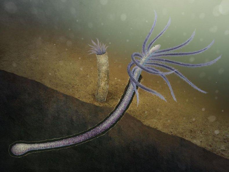 Illustration of Facivermis