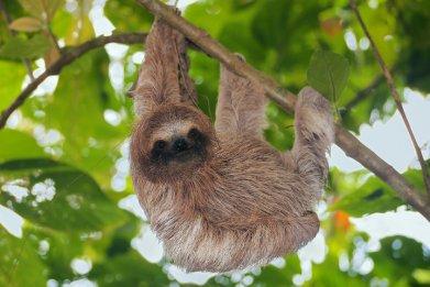 sloth tree stock