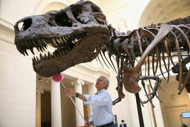 Sue The T Rex