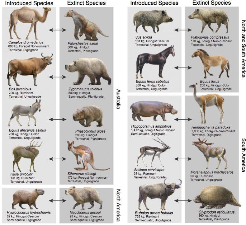 introduced herbivores, extinct species