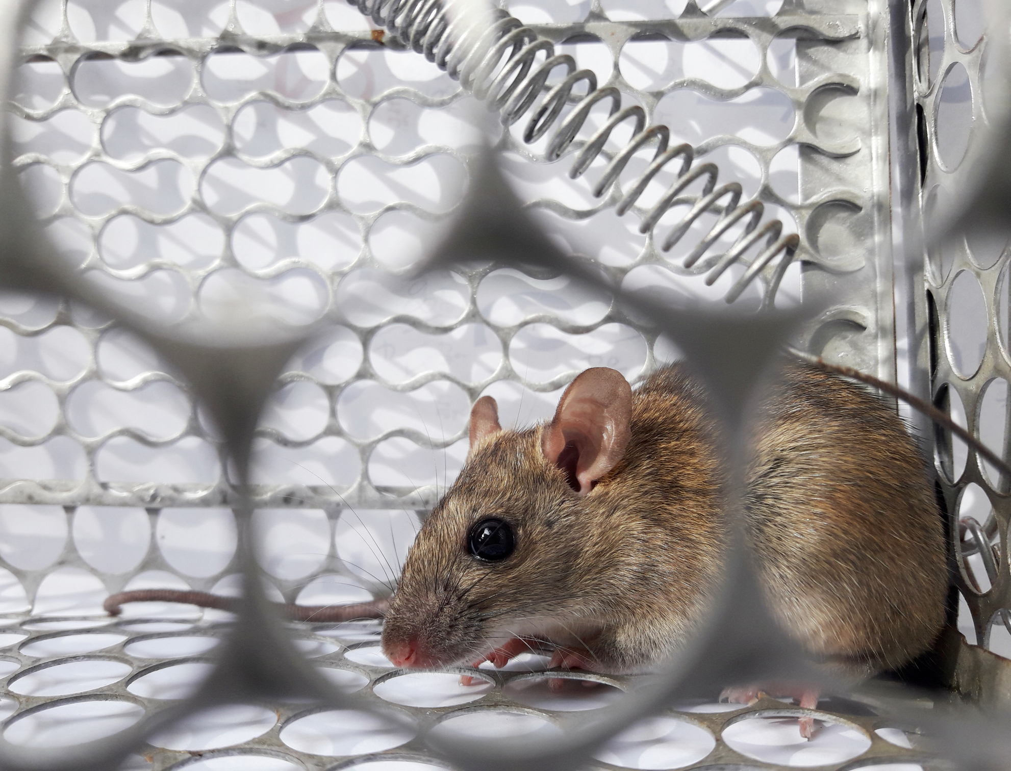 What is hantavirus? Man in China tests positive after dying of infection spread by rodents