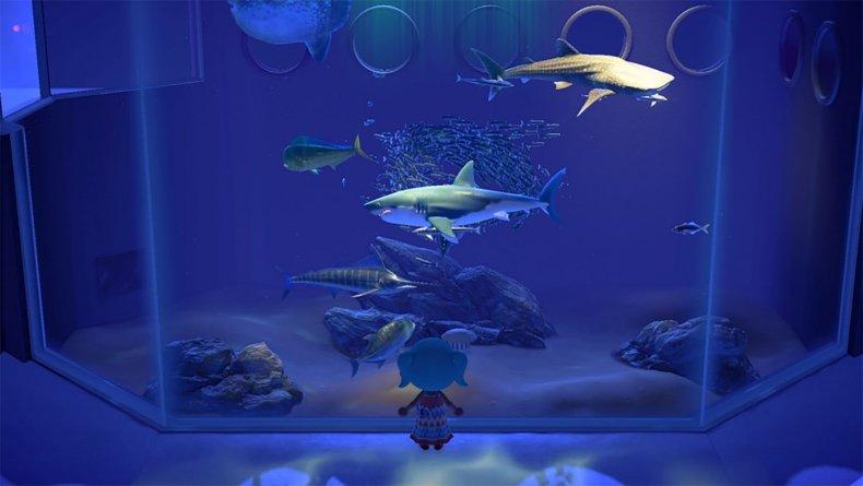 animal crossing new horizons museum sharks