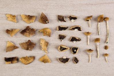 psilocybin, magic mushrooms, drugs, psychedelics, stock, getty