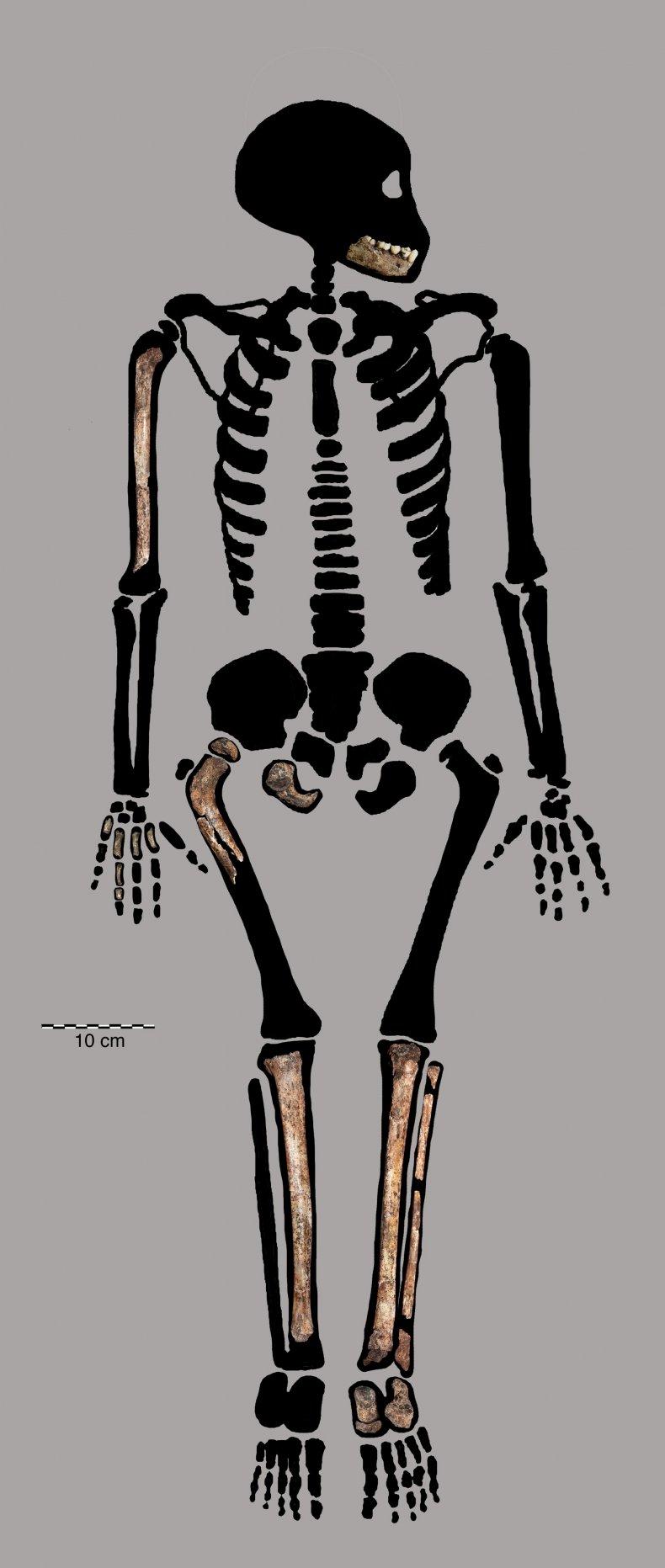 Homo naledi juvenile remains