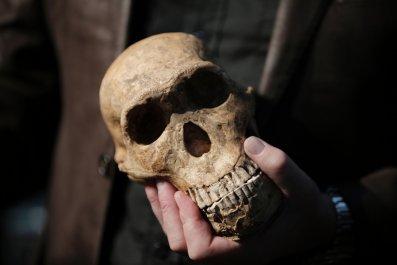 Homo naledi skull