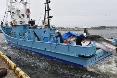 whaling, Japan