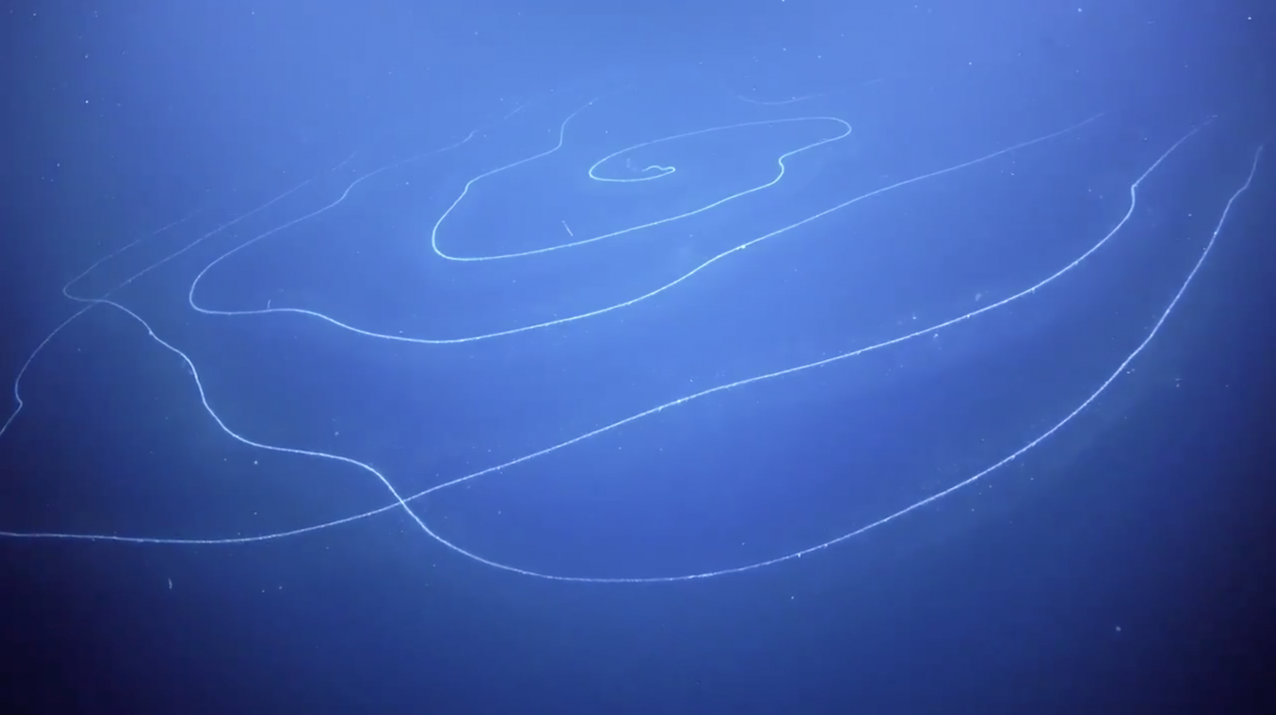 Otherworldly, 150-Foot-Long String-Like Organism Spotted in Deep Sea - Newsweek