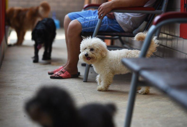 dog meat trade, China