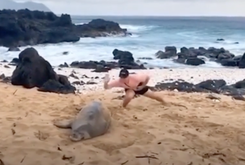 Monk seal attack