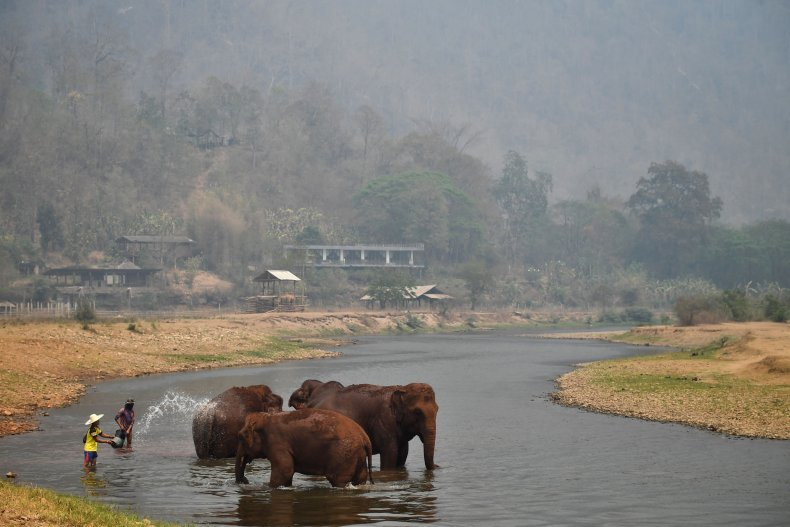 Elephants Thailand tourism