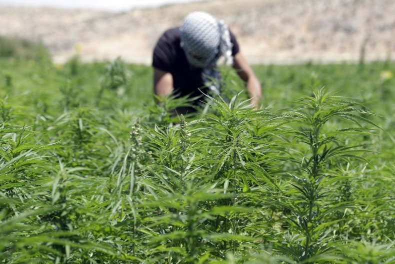 Lebanon cannabis