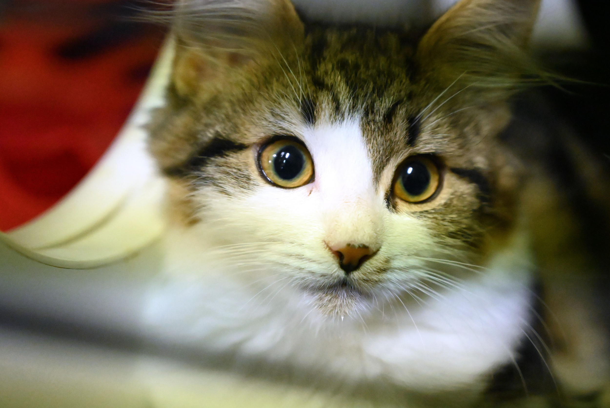 Two New York Cats Become First Pets in U.S. Infected With ...