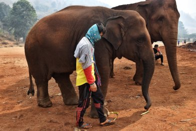 Mahout and elephant at Elephant Nature Park
