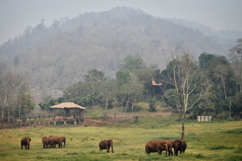 Elephants rescued from the tourism and logging trade