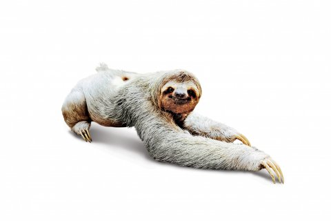 CUL_Uncharted_Animals_Sloths