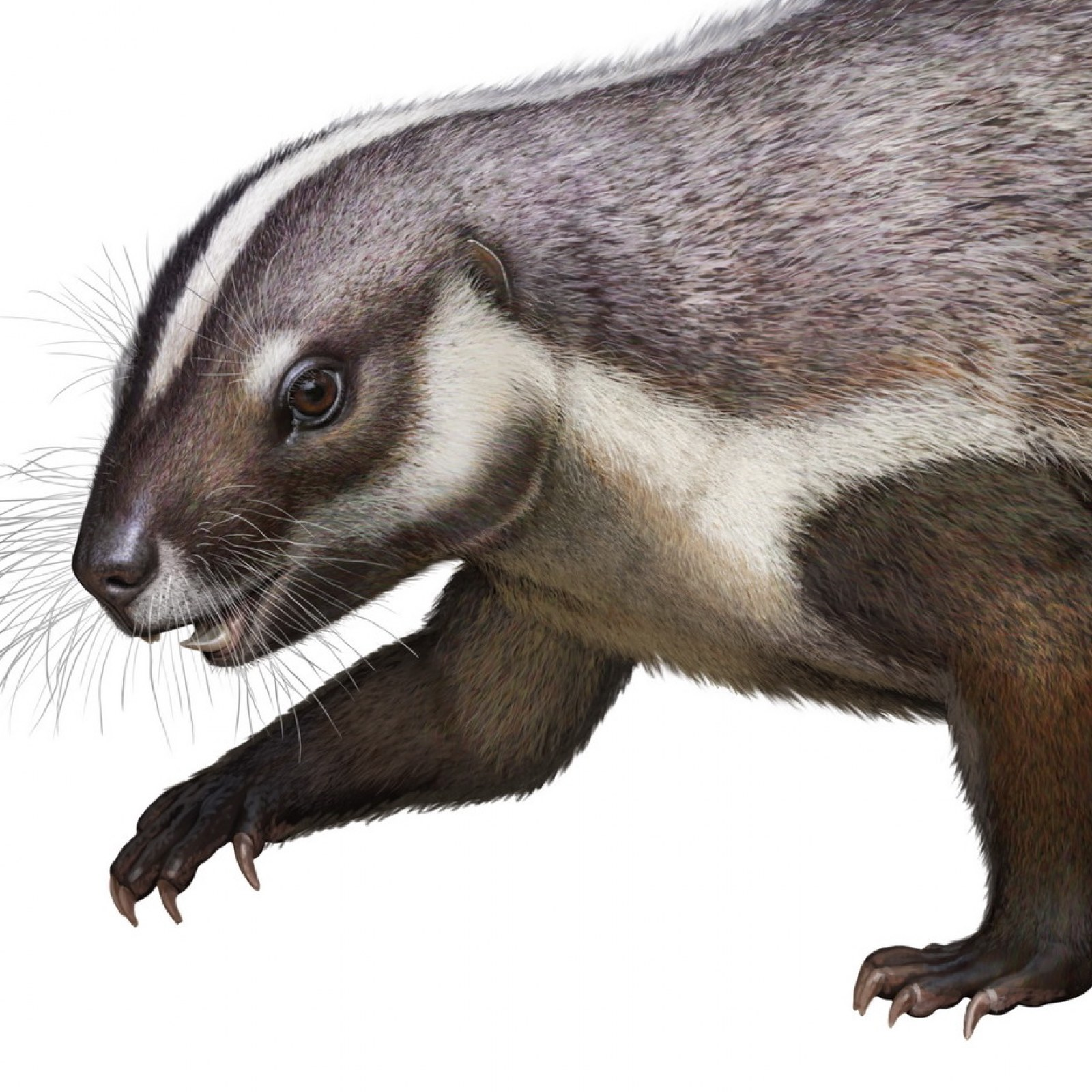 Fossil of Gondwanan 'Crazy Beast' From 66 Million Years Ago Discovered in  Madagascar
