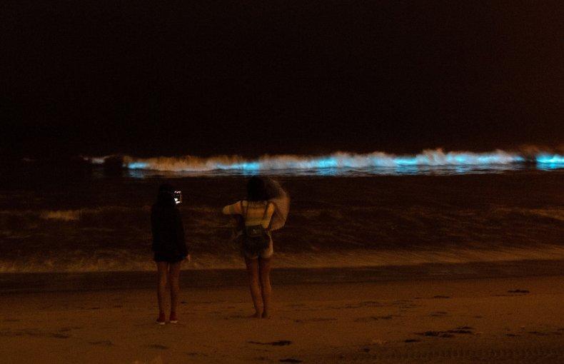 Bioluminescent waves crash on the sand