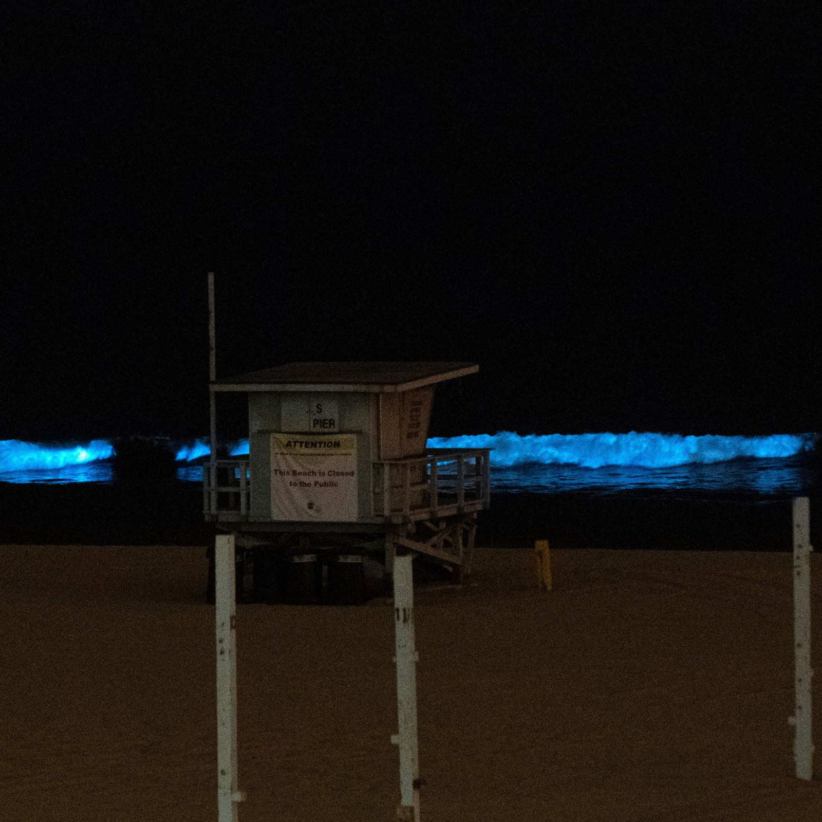 Glowing Blue Waves Reported Across Southern California Coast Due To Red Tide Phenomenon