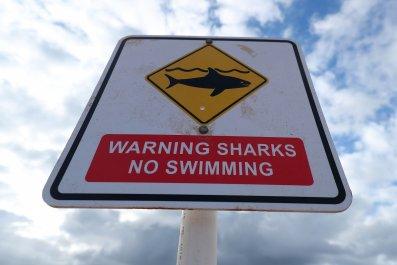 Shark warning yellow sign on the beach