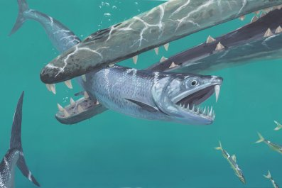 giant saber-toothed anchovy