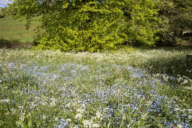 Flowers blooming in Britain