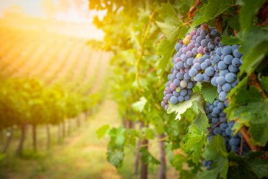 Missing Wine Country? Why Not Try a Virtual Wine Tasting