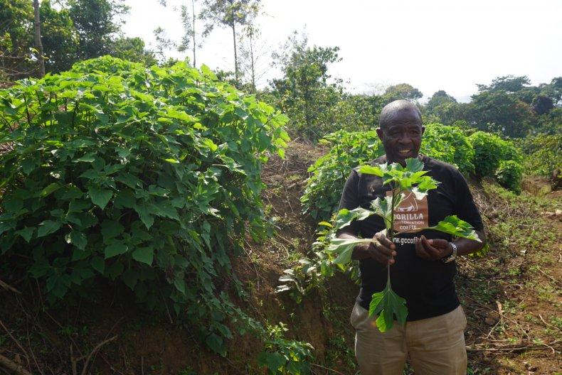 Gorilla Conservation Coffee